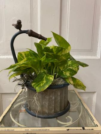 Pothos Spring Planter