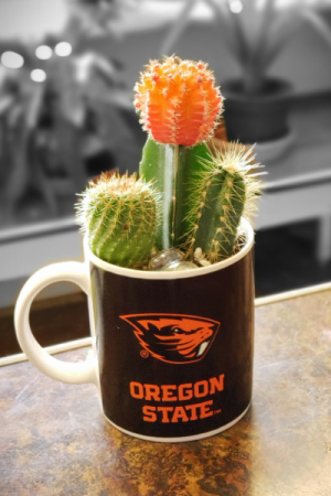 Potted OSU Cacti Garden  Color changing Mug