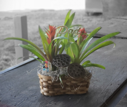 Potted Double Bromeliad  Basket