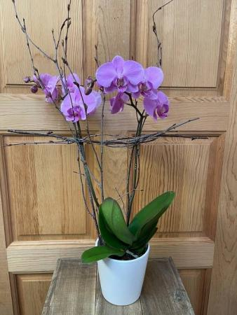 Potted Orchid Plant Best Seller!