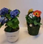 Potted Plants seasonal