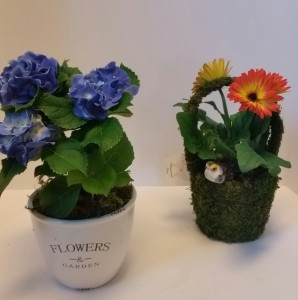 Potted Plants seasonal  in Northport, NY | Hengstenberg's Florist