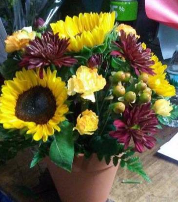 potted sunflowers seasonal