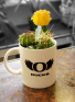 Potted UO Cacti garden Color changing Mug