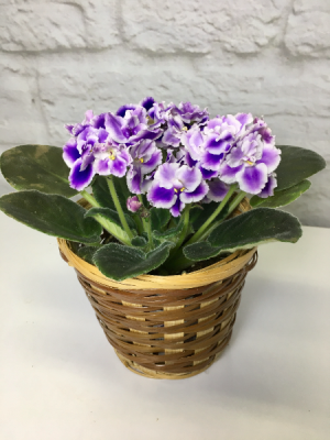 Potted Violet  in Basket  in South Milwaukee, WI | PARKWAY FLORAL INC.