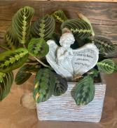 Prayer Plant Live plants