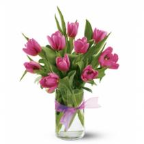 Precious Pink Tlips