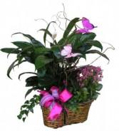 Premium Garden Basket