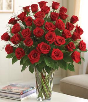 Premium Long Stem 36 Red Roses  in Saint Cloud, FL | Bella Rosa Florist