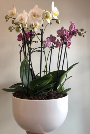 Premium Orchid Planter