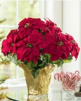 Premium Red Poinsettia  Flowering Plant