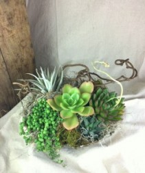 Deluxe Succulent Garden in Local Pottery Succulent Garden