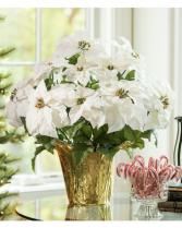 Premium White Poinsettia Flowering Plant