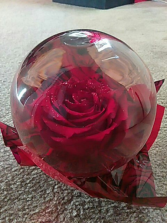 Preserved Rose Globe (Red) $14.95