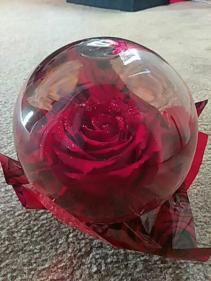 Preserved Rose Globe (Red) $14.95