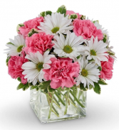 Pretty as a Daisy Cube Vase Arrangement