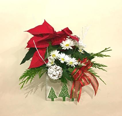 Pretty Christmas Mumsettia Christmas Planter