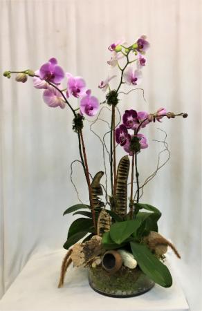 Pretty in Pink Orchid Arrangement
