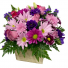 Pretty in Purple Mount Pearl Florist Design
