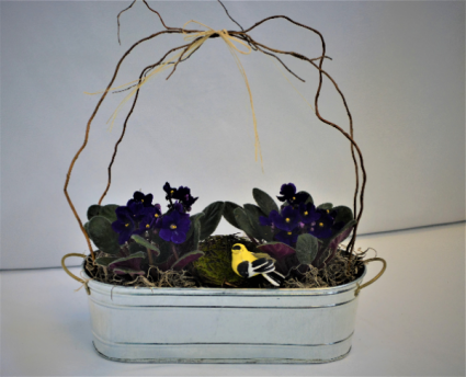 PRETTY IN VIOLETS BLOOMING PLANT