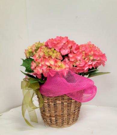 Pretty Pink Hydrangea