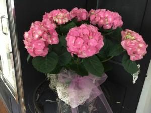 Pretty Pink Hydrangea Plant LIMITED QUANTITIES in Cornelius, NC   BELLA GRACE FLORAL