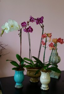 Pretty Potted Orchid Plants