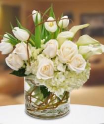 Pristeen Tulips