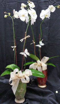 PROFESSIONAL ASSISTANT'S DAY ORCHID