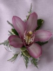 CYMBIDIUM ORCHID Prom Corsage in Lake Worth, FL | AST FLOWERS INC DBA A FLOWER PATCH