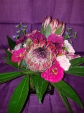 Protea Party Any Occasion