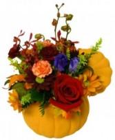 Pumpkin Beauty Bouquet