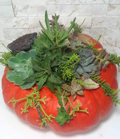 Pumpkin Centerpiece Succulents