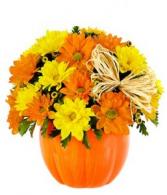 pumpkin daisy daisies in ceramic pumpkin