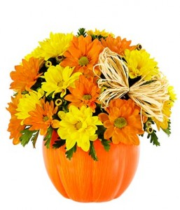 pumpkin daisy daisies in ceramic pumpkin in Lebanon, NH | LEBANON GARDEN OF EDEN FLORAL SHOP