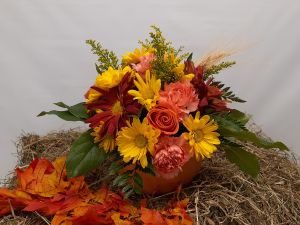 Pumpkin Delight Fall Arrangement in East Templeton, MA | Valley Florist & Greenhouse
