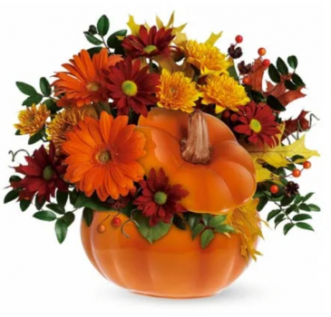 Pumpkin   designer  choice