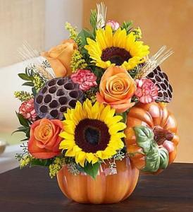 """Pumpkin n """" Posies Roma florist"""
