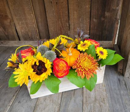 Pumpkin Patch Fresh Floral Design