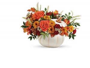 Pumpkin Patch Fresh flowers  in Fairfield, OH | NOVACK-SCHAFER FLORIST
