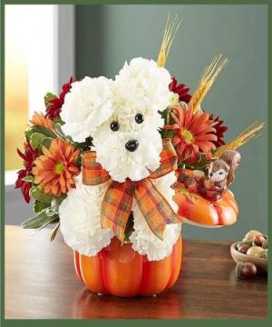 Pumpkin Pooch  in Arlington, TX | Lige Green Flowers