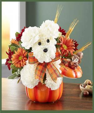 Pumpkin Pooch  in Arlington, TX | Erinn's Creations Florist