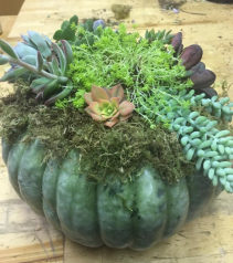 Pumpkin Succulent Centerpiece Fall Workshop - October 25th in Gilroy