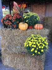 Pumpkins, Fall Mums And Straw