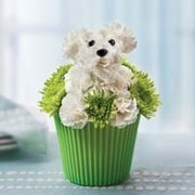 Pup-cake in Bloom All Around