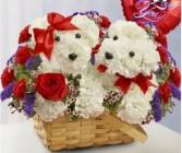 Puppy Love Carnations