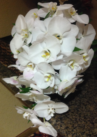 PURE AND WHITE COLLECTION ORCHIDS