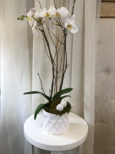 Pure and White  Easter Orchid