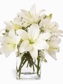 Pure as Ivory Lilies