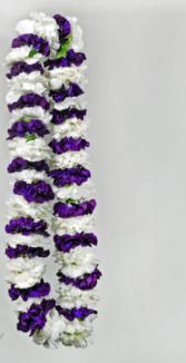 PURPLE AND WHITE CARNATION LEI